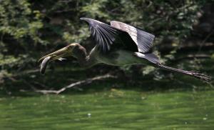 दुधवा नेशनल पार्क में मिली पक्षियों की चार नई प्रजातियां