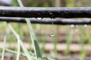 New web-based platform to help with micro irrigation