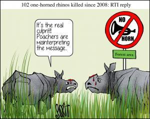 rhinos killed