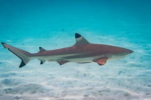 Could climate change be behind fewer shark attacks worldwide?
