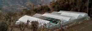 Himachal's farm success story at risk of going awry