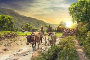 Interim Budget 2019: Government's big farmer push falls short