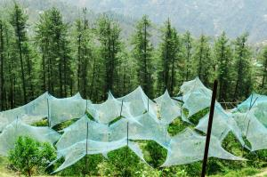 Apple line goes topsy-turvy in the Himalayas