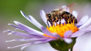 Is the world hurtling towards an 'Insect Apocalypse'?