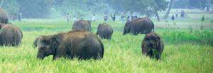 Elephants' conflict of diet