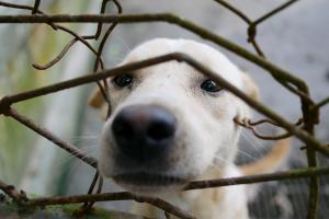 Preventing animal cruelty is physically and emotionally risky for front-line workers