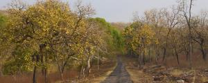 Tadoba reserve: Tourism is good news, but infra projects bad