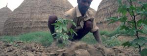 Farm it like India