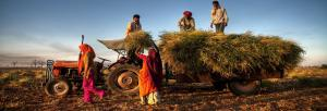 Will the farmer benefit from cash support?