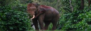 Early elephant warning systems help, but are short-term measures: experts