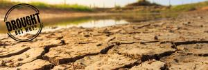 Drought but why: Jharkhand staring at food insecurity