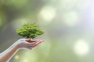 India's first forest-certification scheme gets global recognition