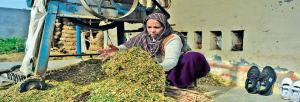 Eye-opening study on Punjab's rural women labourers poses many questions in poll season