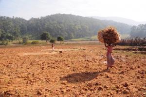 पर्यावरण मंत्रालय ने नियमों को कमजोर कर झारखंड के सारंडा में खनन का रास्ता साफ किया