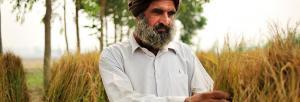 In poll season, Punjab debates legalising poppy seed and opium farming