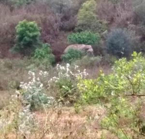 Elephant kills five in Odisha