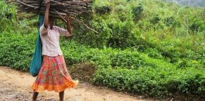 Global non-profits appeal to India to prevent forced evictions of forest dwellers