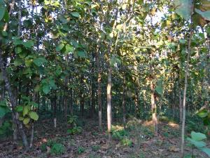 Private funds for Madhya Pradesh forests: Beware of legal concerns, warn experts