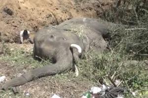 हाथियों की मौत के लिए एनएचएआई जिम्मेवार, नहीं बनाया फ्लाईओवर