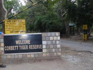 जिम कार्बेट में एक और बाघ की मौत, क्या हैं कारण