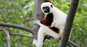 Five actions Madagascar's president must take to save country's biodiversity