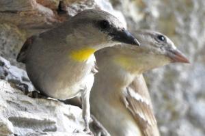 जैव-विविधता की अनूठी मिसाल है छोटी-काशी की प्राकृतिक धरोहर