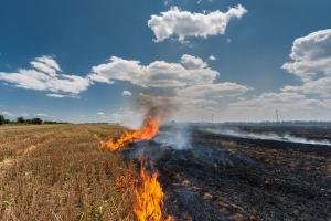 Stubble burning: A problem for the environment, agriculture and humans