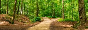 El Salvador recognises forests as living entities