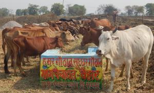 क्या नरवा, गरवा, घुरवा से सुधरेगी छत्तीसगढ़ की ग्रामीण अर्थव्यवस्था