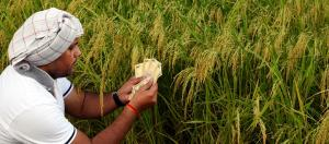 India's non-agrarian rural economy struggles for sustenance