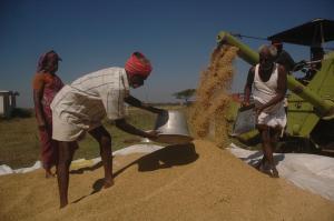 खेती किसानी छोड़ रहा है ग्रामीण भारत, आजीविका के लिए कहां जाएं किसान