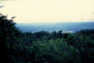 क्या वन विकास निगम की उपयोगिता नहीं रही