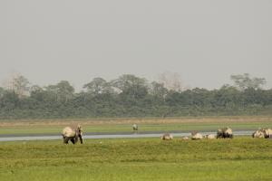 जंगल से आये हाथियों ने किसान को कुचल डाला