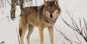 Academia can help humans and large carnivores coexist