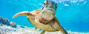 Carmichael approval a death-knell for the Great Barrier Reef