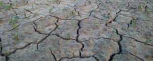 Drought watch: Is there any monsoon effect?