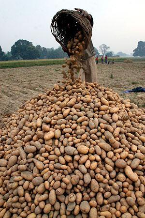 """पेप्सिको ने गुजरात के किसानों पर बौद्धिक संपदा अधिकारों का उल्लंघन करने के आरोप में मुकदमा दायर किया। यह मुकदमा 2016 में कंपनी द्वारा पंजीकृत दो आलू किस्मों में से एक """"एफएल-2027"""" की खेती को लेकर किया गया (रॉयटर्स)"""