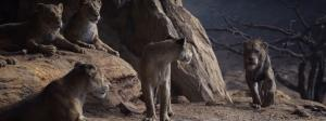 It's Sarabi's pride, Mufasa just lives there: a biologist on The Lion King