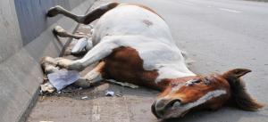 New glanders action plan: Equine fairs won't be allowed near infected zone