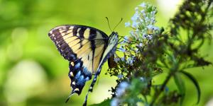 Nigeria becomes fourth African nation to join global coalition to protect pollinators