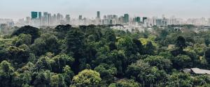 Urban expansion ate into 35 million ha forests between 1992 and 2015: Study