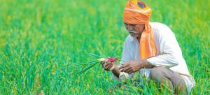 Will Punjab and Haryana HC's recommendations reduce farmers' burden?