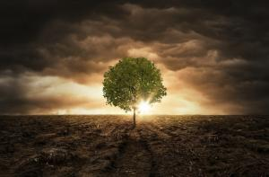 Trees not a silver bullet to mitigate climate change