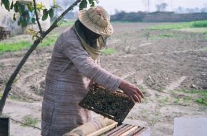 सीएसई हनीफ्रॉड खुलासे का असर: मधुमक्खी पालकों को पांच साल बाद मिल रही शहद की दोगुनी कीमत