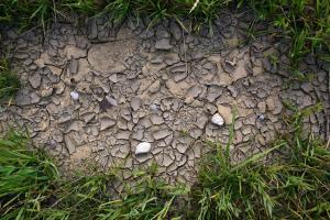 बढ़ते तापमान से बदहाल धरती