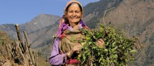 How forests can help in doubling farmers' income