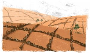 बंजर होता भारत -5:  राजस्थान ने दिखाई बंजर होने से बचने की राह