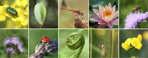 Talks on global plan to protect biodiversity begin in Nairobi
