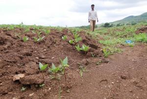 बंजर होता भारत -3: आठ साल में खेती लायक नहीं रही 5200 हेक्टेयर जमीन