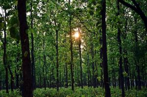 Centre may open 43,000 ha of Jharkhand's Saranda forest for mining